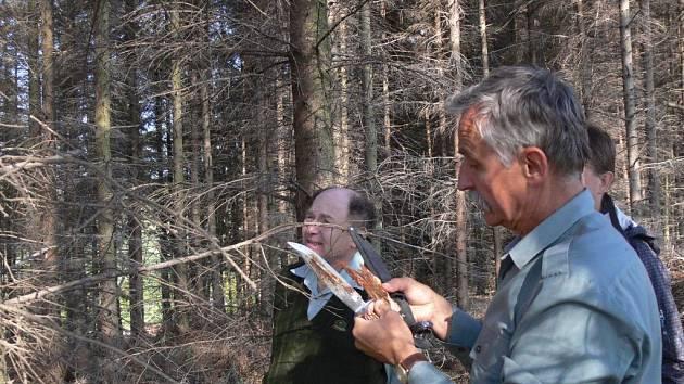 V lesích na Hranicku se rozšířil kůrovec, situací se zabývá inspekce