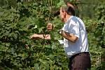 Zemědělské družstvo v Kokorách přišlo díky úterní vichřici o polovinu úrody. Bouře poničila chmelnici v Čekyni, ale také lány ječemene a máku v Nelešovicích. Škody se vyšplhaly na 10 milionů korun.