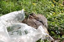 Tělo mrtvého divočáka nalezl strážník v lesíku nedaleko Brodku u Přerova.