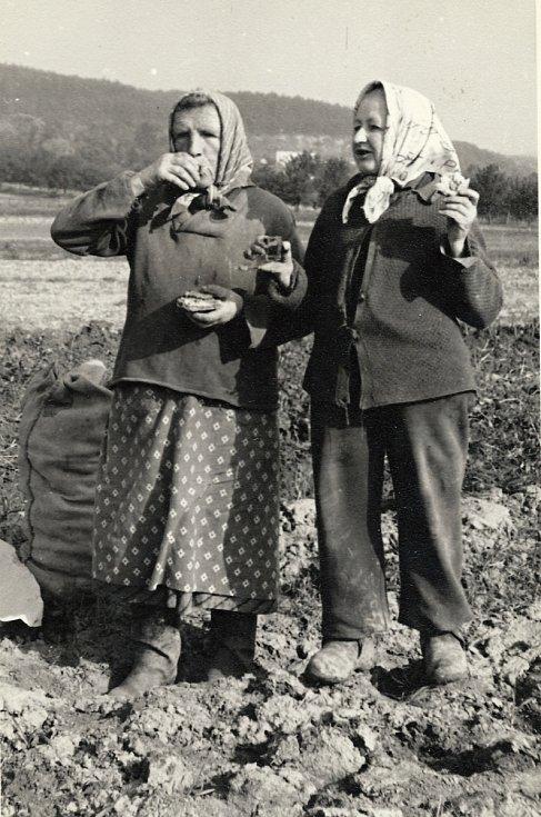 Ve Veselíčku se uměli lidé vždy bavit, nejen ve spolcích, ale i při práci. Nechyběla ani zdravotní štamprlička.