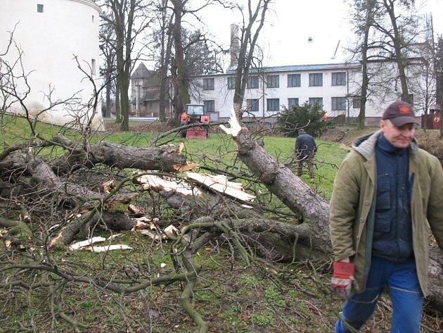 Některé stromy ze zámecké aleje v Dřevohosticích nepřežily řádění sobotního vichru.