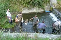 Rybáři z Hranic v sobotu 2. srpna stěhovali přes dva tisíce kusů pstruhů z potoka Ludina ve Stříteži nad Ludinou do potoka Velička. Důvodem přesunu ryb je připravovaná oprava břehů Ludiny.