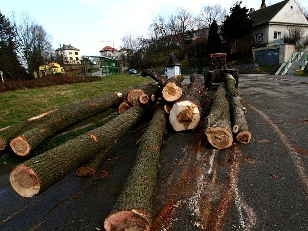 Na židovském hřbitově začalo kácení suchých a silně poškozených stromů.