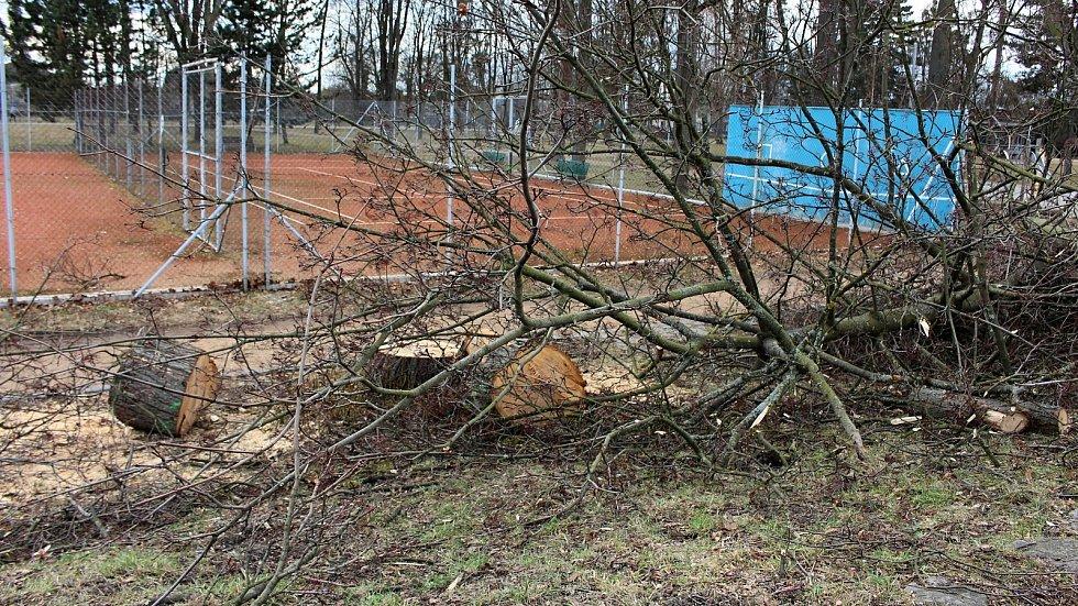 Pokácené stromy a keře v Sadech Československých legií v neděli 14. března 2021.