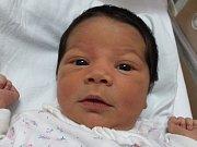 Eva Bergmannová, Přerov, narozena dne 14. listopadu 2016, míra: 50 cm, váha: 3486 g