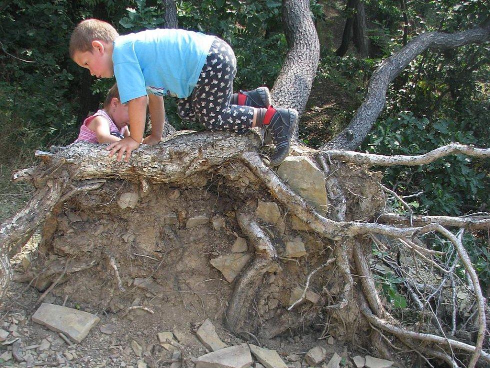 Dětem stromy v chráněné oblasti Hůrka v sousedství Hranic vůbec nepřekážejí. Výlet k vyhlídce u svatého Jana nebo k propasti jim naopak dokáží příjemně zpestřit.