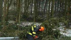 Následky silného větru, který v polovině března lámal stromy v Olomouckém kraji