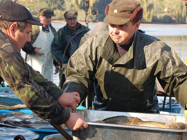 Tisíce zájemců přilákal o víkendu tradiční výlov Hradeckého rybníka v Tovačově.