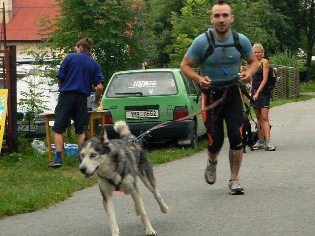 Během náročného závodu musí být pes neustále na vodítku.