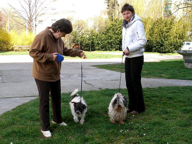 Poplatky za psy museli jejich majitelé z Přerova zaplatit dokonce března.