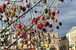 Velikonoční strom tzv. Kraslicovník letos na hranické náměstí doputoval z Bělotína.