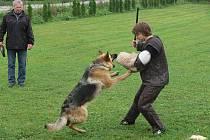 Třicet psích závodníků předvádělo v Hranicích svou poslušnost a obranu.