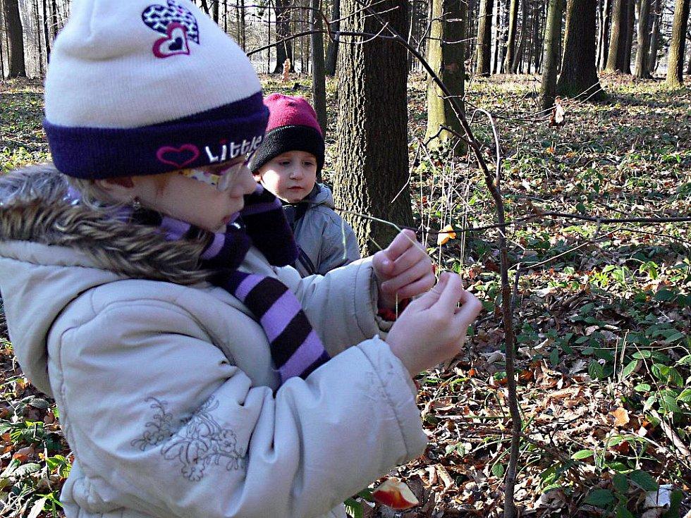 Lesní zvířata si také mohou užívat vyzdobených vánočních stromků.