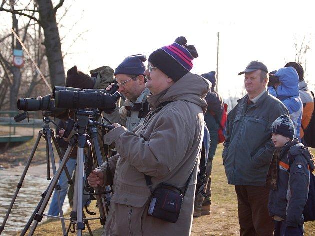 Pozorování ptáků. Ilustrační foto