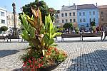 Snídaně přímo na Masarykově náměstí, piano, na které si mohli zahrát kolemjoucí. Ale také prohlídky památek zdarma – například synagogy, budovy staré radnice nebo mázhausu, který veřejnosti není běžně přístupný.
