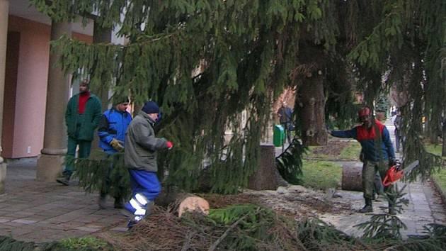 Po padesáti letech strom v Bulharské padl.