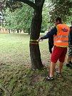 Setkání zástupců města s občany kvůli kácení stromů na Struhlovsku