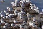 Nebezpečně vypadá v důsledku jarního tání řeka Bečva