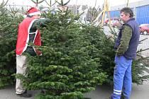 Od počátku prosince si lidé v Hranicích mohou zakoupit vánoční stromek. Nápor kupujících však očekávají prodejci až v druhé polovině měsíce.
