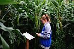Kukuřičné bludiště v Hranicích