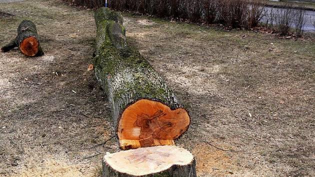 Kácení stromů v hranickém parku