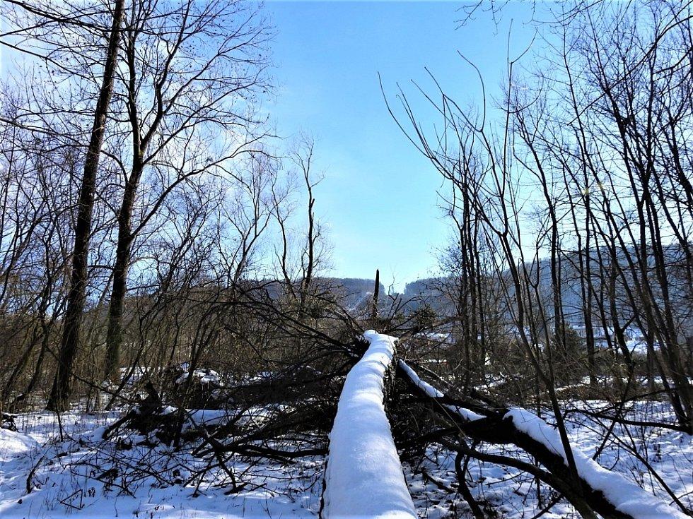 Zimní Hranice ve středu 20. ledna - u Tofy.