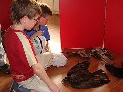 Unikátní výstava, která odhaluje lidskou krutost páchanou na dravcích, je k vidění v Ornitologické stanici (ORNIS) v Přerově.