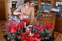 Vánoční hvězda se tradičně prodává v Cafí-baru na zámku.
