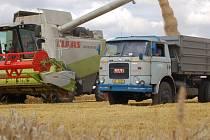 Sklizeň řepek a obilovin v současné době zaměstnává všechny zemědělské podniky na Přerovsku.