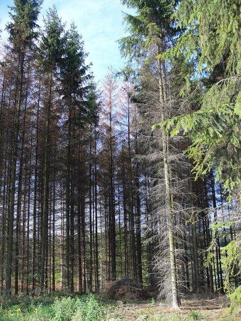 Vlesích na Hranicku se rozšířil kůrovec, situací se zabývá inspekce