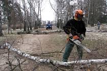 Do konce března zmizí z Kolářových sadů  přes dvě stovky stromů.