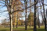 Podzim v parku v Hranicích, listopad 2020.