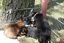 Posledními přijatými psy v hranickém útulku byla čtyři malá štěňata, která někdo nechal minulý týden ležet v krabici před ordinací zvěrolékaře.