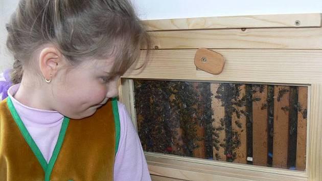 O expozici živých včel v hranickém muzeu včelařství všem návštěvníkům poutavě vypráví teprve sedmiletá Libuška Malovcová