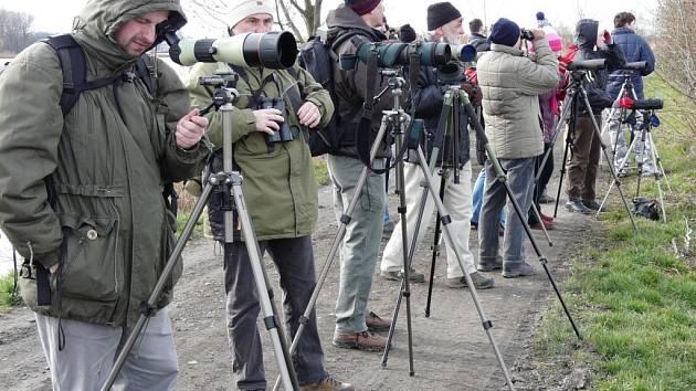 Lidé mohli na tovačovském rybníku pozorovat několik druhů ptactva.