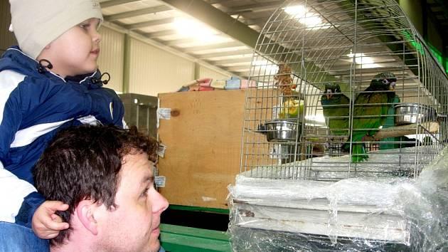 Na expozici exotického ptactva se na přerovské výstaviště přišli podívat dospělí i děti.