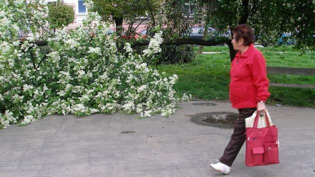 Silný vítr zlomil jednen ze stromů v parčíku na náměstí Svobody v Přerově.