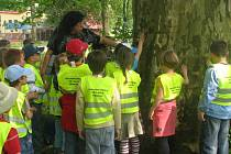 Děti ze zájmového kroužku Majáček se sešly u svého kandidáta do soutěže Strom Hranicka roku 2009. Změřily jeho kmen a z úst odbornice na životní prostředí Ivany Zaoralové si vyslechly spoustu zajímavostí.