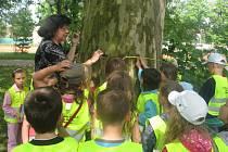 Vloni se stal stromem stotříletý platan javorolistý. Do soutěže ho přihlásily děti ze zájmového kroužku Majáček
