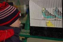 Výstava exotických ptáků