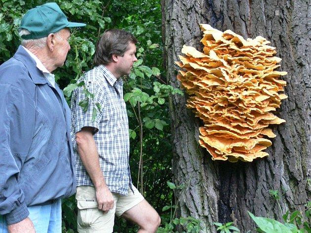 Obří houba.