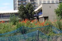 Obyvatelé města nemohli novému urbanistickému řešení lokality přijít na chuť, protože podle jejich mínění bude dům hyzdit celé prostranství u sokolovny.