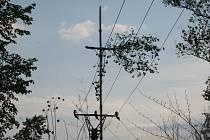 U přerovské laguny spadl strom na dráty elektrického vedení.