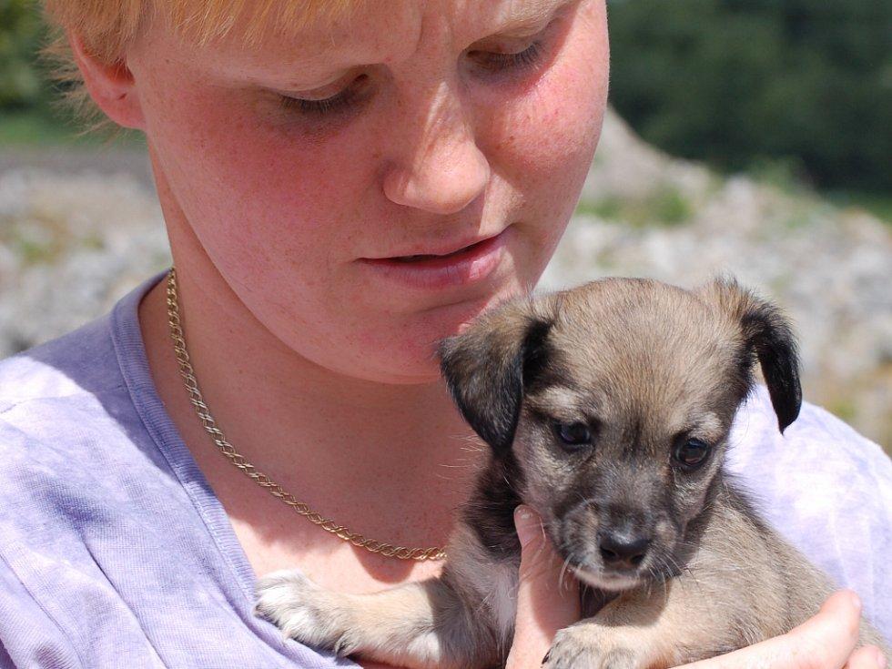 Pracovnice přerovského útulku Soňa Hynčicová drží v náručí jeho nejmladšího obyvatele.
