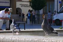 Holubi na hranickém náměstí