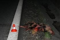 Srážka s divokou zvěří neměla naštěstí pro žádného ze tří řidičů osobních vozů zdravotní následky.