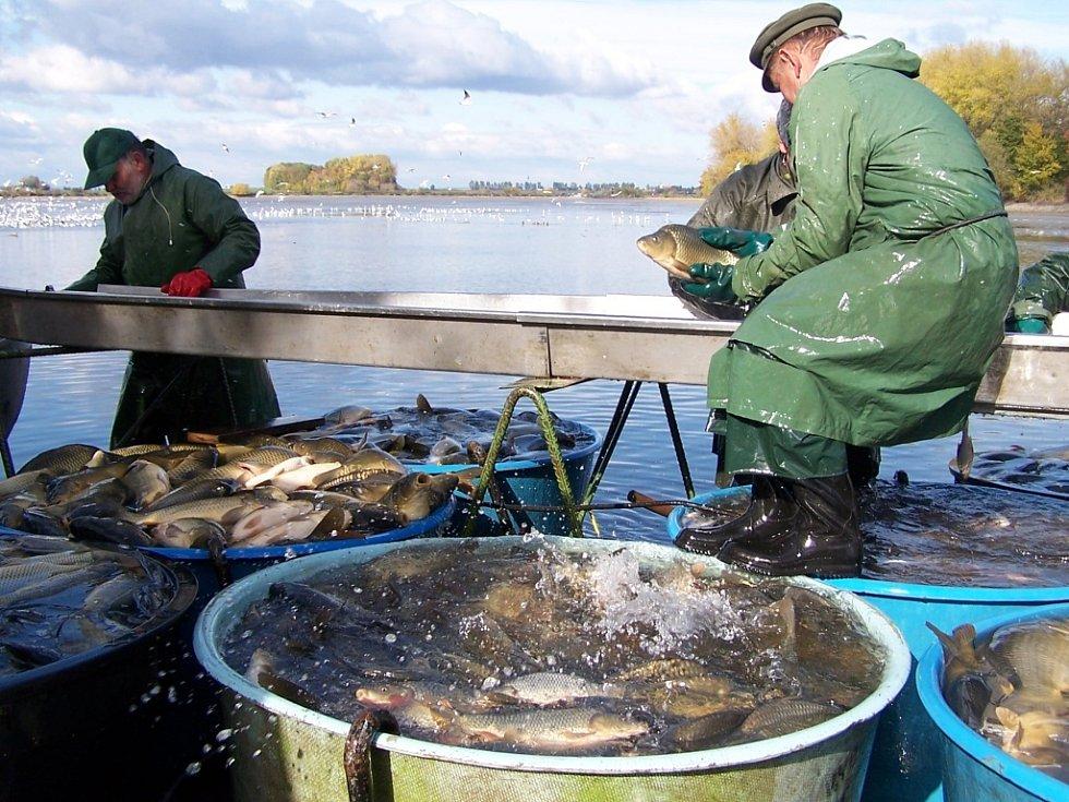 Deset tisíc lidí si nenechalo ujít tradiční výlov, který se konal na Hradeckém rybníku v Tovačově.