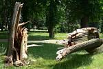Popadané stomy ležely ve čtvrtek 26. června i v hranickém parku.
