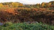 Vypuštěný a zarostlý rybník v Drahotuších