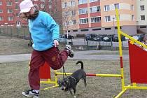 Kurz agility hranického Domu dětí a mládeže